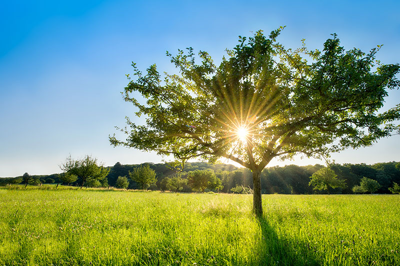Zappendorfer Landschaft mit Baum und Sonne